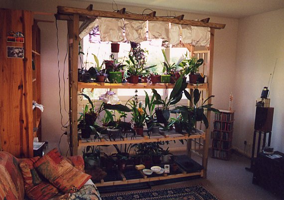 orchidee a la maison